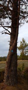 Trærne illustrerer samarbeide for klima